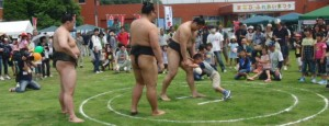 cropped-sumo342.jpg